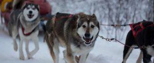 Yellowknife Enodah Dog Kennels